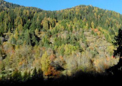 Tsuc Wood